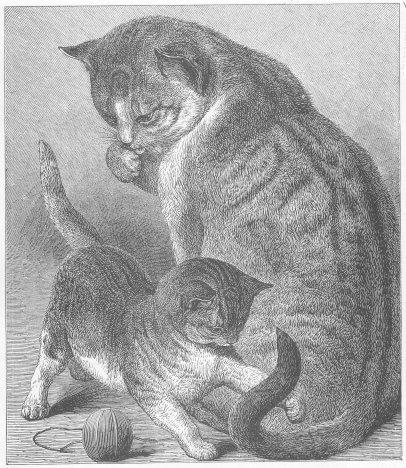 cat  Breeds amp Facts  Britannicacom